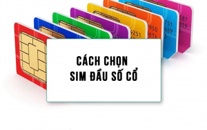sim-dau-so-co-1